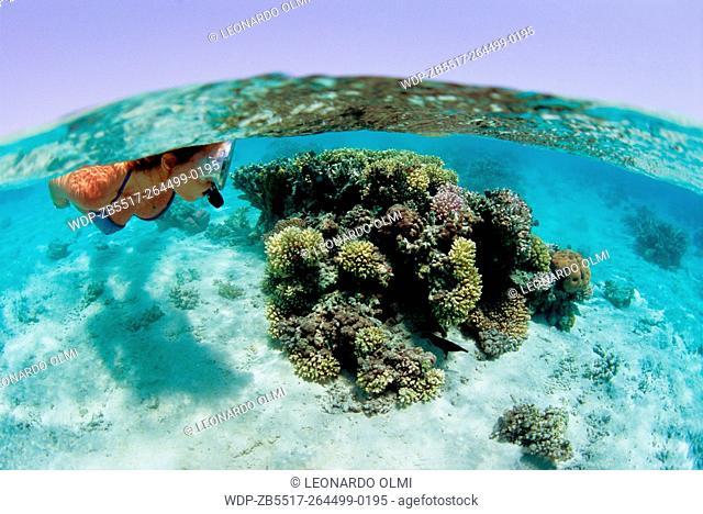 Egypt, Red Sea, Marsa Alam, snorkeling on coral reef