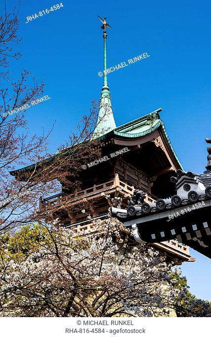 Pagoda in the cherry blossom in the Maruyama-Koen Park, Kyoto, Japan, Asia