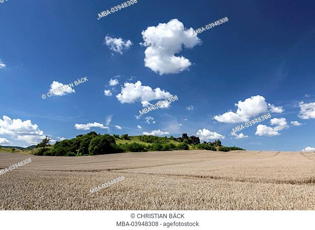 Wheat field in the Harz, Saxony-Anhalt, Central Germany, Germany