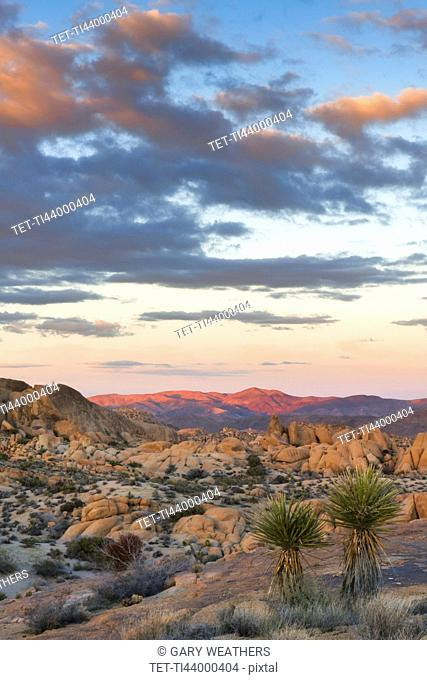 USA, California, Joshua Tree National Park, Desert with rock formations at sunset