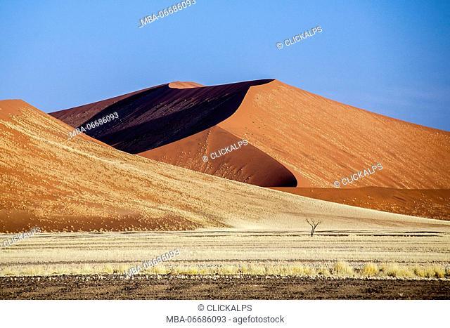 Dried plants among the sand dunes shaped by wind Deadvlei Sossusvlei Namib Desert Naukluft National Park Namibia Africa