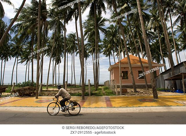 Coconut palms along the beach, Mui Ne beach, south-central coast, Vietnam, Indochina, Southeast Asia, Asia