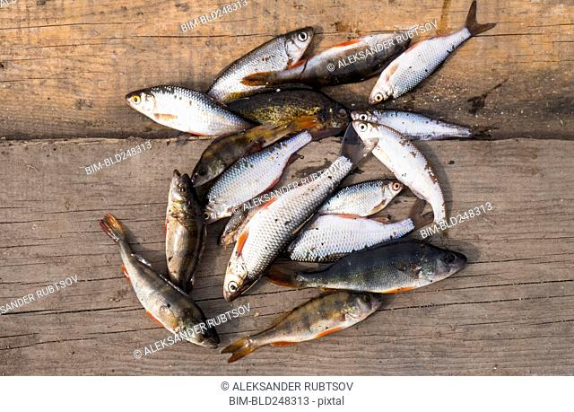 Fish on wooden boards