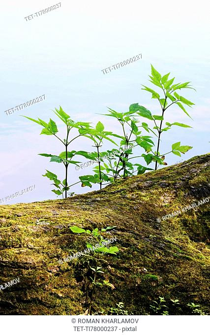 Young plants growing on tree trunk