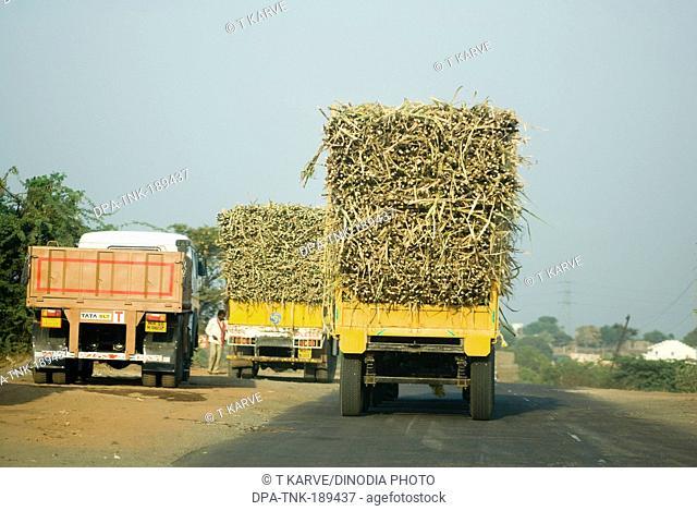 Sugarcane trucks going to sugar factory parli Beed Maharashtra India
