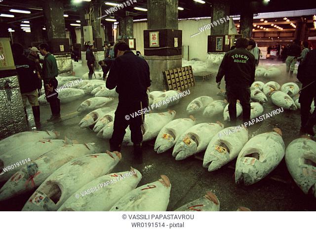 People at Tuna auction at world's largest fish market, Tsukiji Fish market, Tokyo, Japan