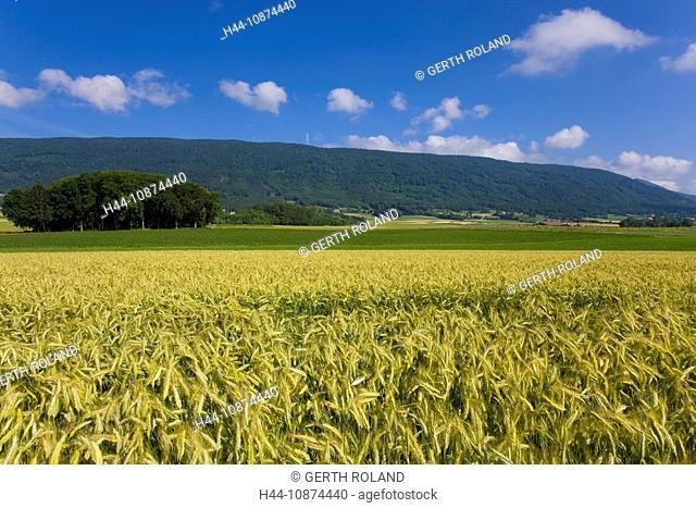 Berolle, Switzerland, canton Vaud, grain-field, cornfield, wood, forest, summer