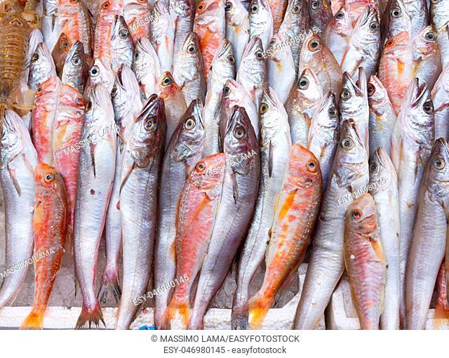 Medterranean fish exposed at open seamarket, Naples