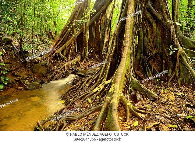 "Stream in """"Tree Top"""" trail in Cotigao sanctuary, Goa, India"