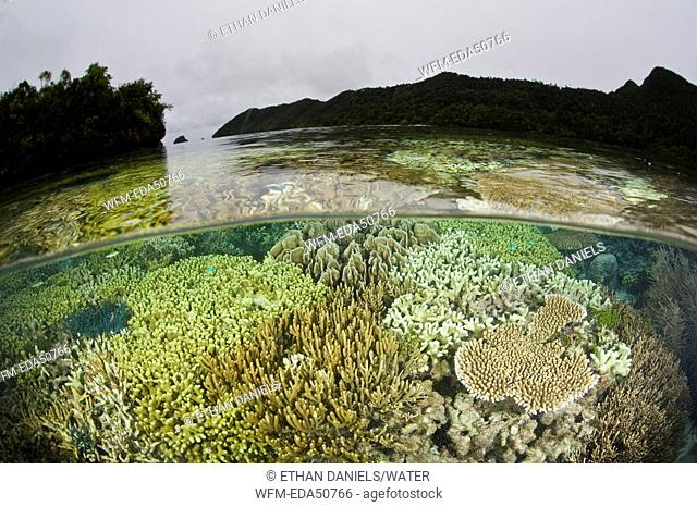Twighlight in Coral Reef, Raja Ampat, West Papua, Indonesia