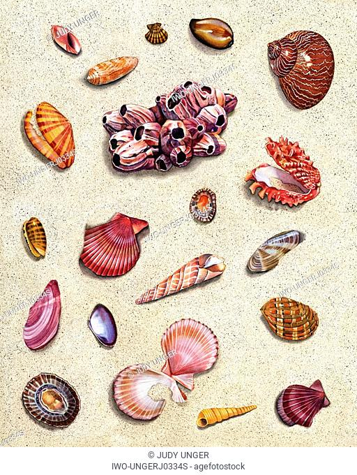 A Group of Sea Shells