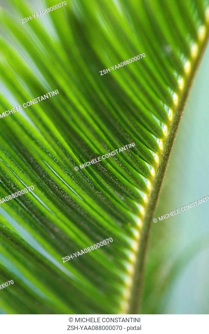 Plant frond, extreme close-up