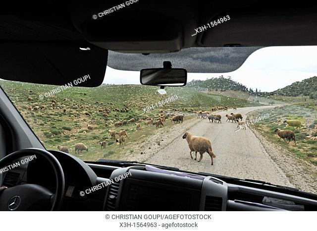 on the road, Khenifra region, Middle Atlas, Morocco, North Africa