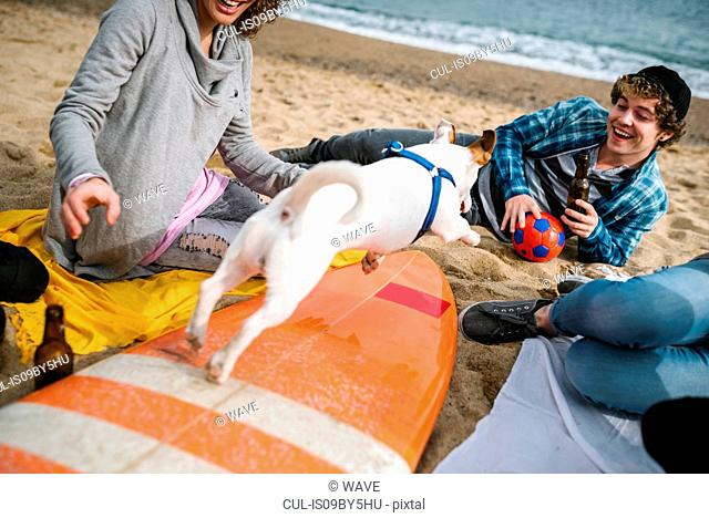 Dog jumping over surfboard at beach party, Barcelona, Spain