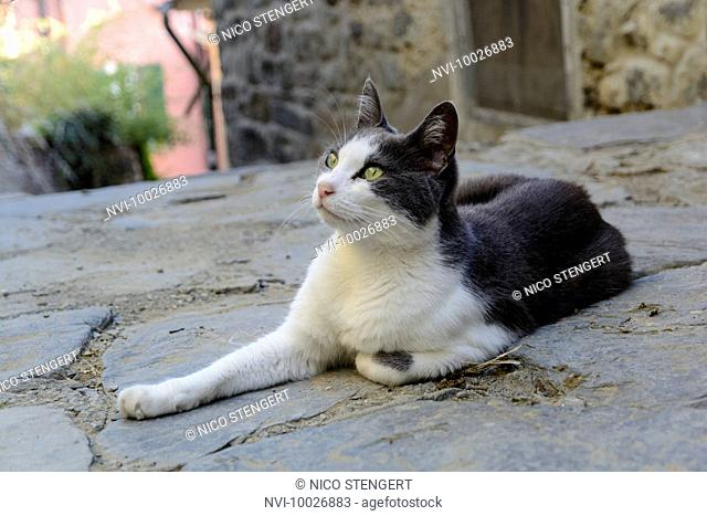 Cat in Vernazza, Italian Riviera, Cinque Terre, Liguria, Italy