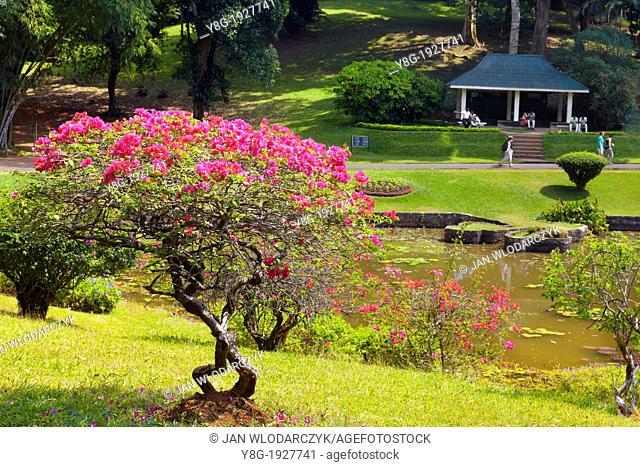 Sri Lanka - Kandy, Peradeniya Botanic Garden, central region of Sri Lanka Island