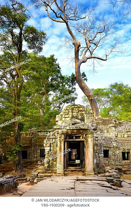Ruins of Ta Prohm Temple, Angkor old Khmer Empire, Angkor Temples Complex - Cambodia, Asia, UNESCO
