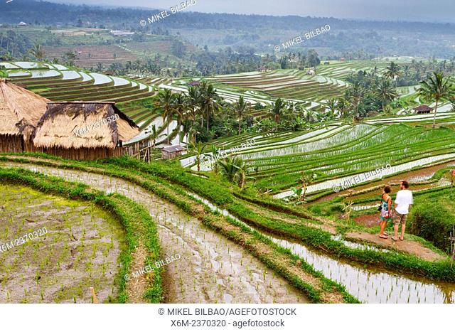 Jatiluwih rice terraces. Bali. Indonesia, Asia