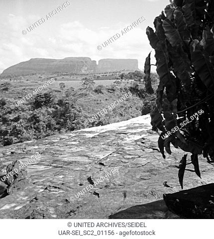 Landschaft bei Canaima, Venzuela 1966. Landscape near Canaima, Venezuela 1966