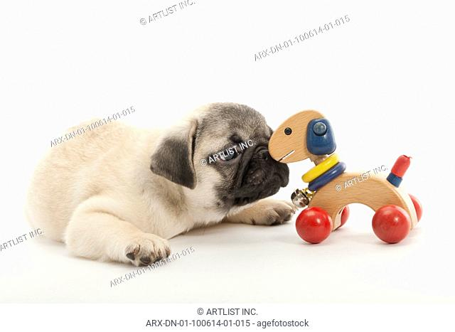 A dog kissing the toy