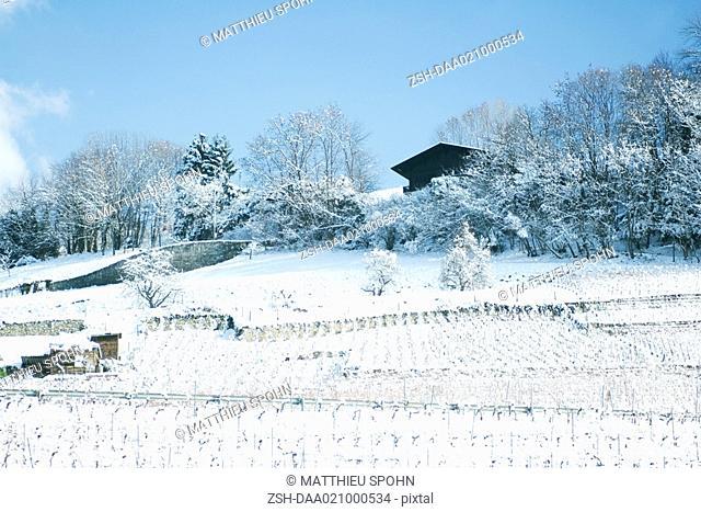 Switzerland, Vaud canton, vineyards and chalet in snow