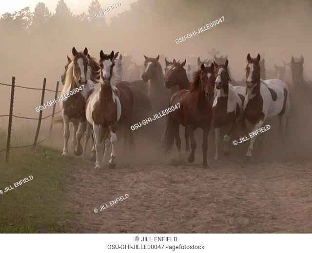 horses, animal, stampede