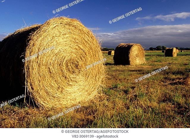 Hay rolls, Nisqually National Wildlife Refuge, Washington