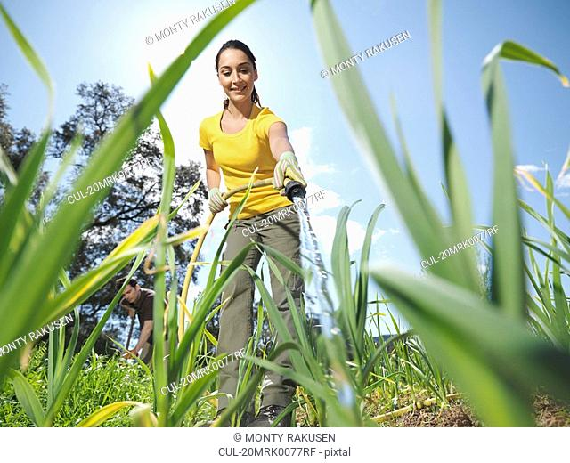 Woman watering garlic field with hose
