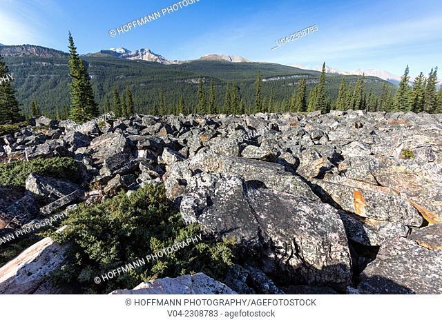 Quartzite Boulder in the Jasper National Park, Alberta, Canada