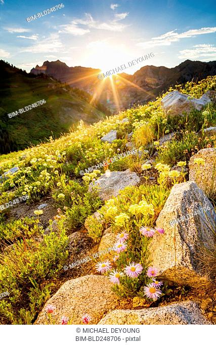 Wildflowers on sunny mountain
