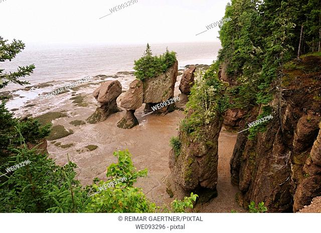 Flower Pot sea stacks at low tide at Hopewell Rocks Bay of Fundy New Brunswick