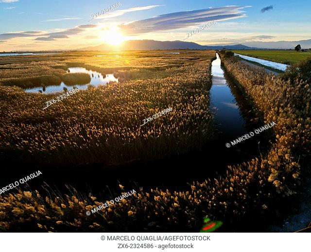 Sun sets behind Montsia Hills and over common reeds of Encanyissada Lagoon. Ebro River Delta Natural Park, Tarragona province, Catalonia, Spain