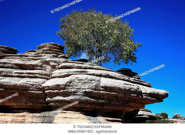 Weird stone formations in the national park tablespoons Torca, Paraje Natural goal cal de Antequera, is of a 1171-ha-nature reserve with unusual two-pronged...