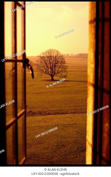 Sepia toned tree in field through window