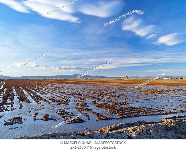 Flooding rice fields before sowing during springtime. Ebro River Delta Natural Park, Tarragona province, Catalonia, Spain