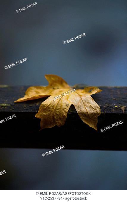 Fallen leaf stuck on wooden fence