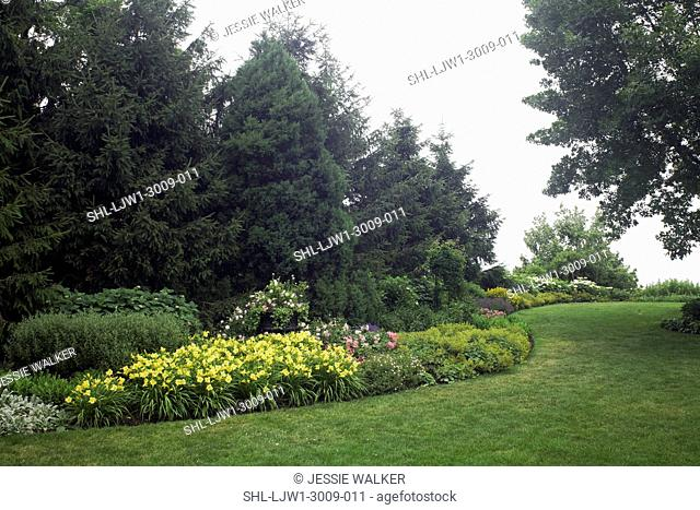 GAsideRDENS, North border, curving flower beds, line of fir trees, day lily, roses, ladys mantle, lawn to the right