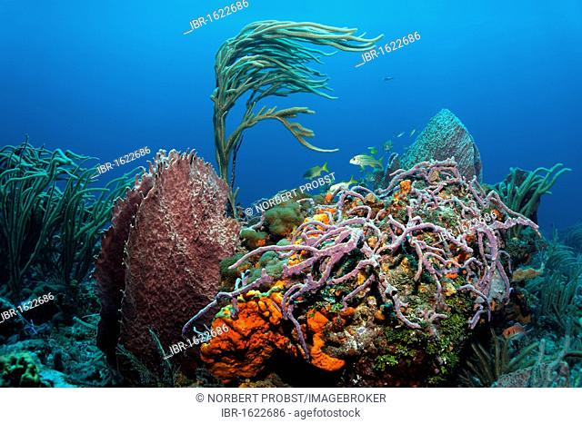 Overgrown reef block in a coral reef, various colourful secies of sponges and corals, Little Tobago, Speyside, Trinidad and Tobago, Lesser Antilles