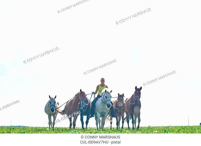 Mid adult woman riding and leading six horses in field
