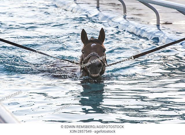 United Arab Emirates - Racing horse trains in water in Dubai