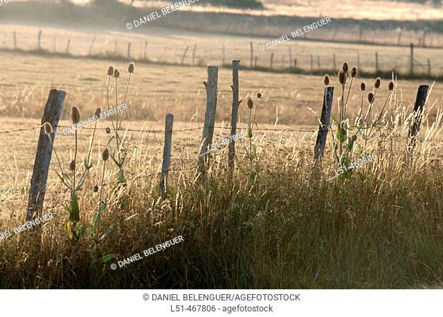 Fence. San Emiliano. Babia. Leon province. Spain