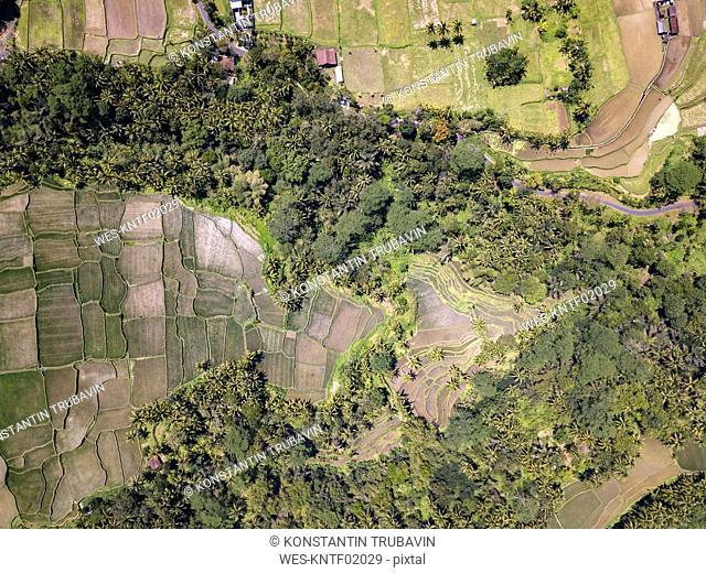 Indonesia, Bali, Ubud, Aerial view of rice fields