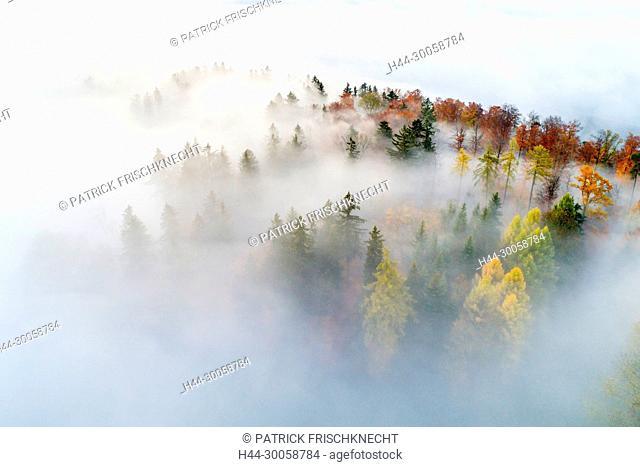 Wood with fog patches, Zurich uplands, Switzerland