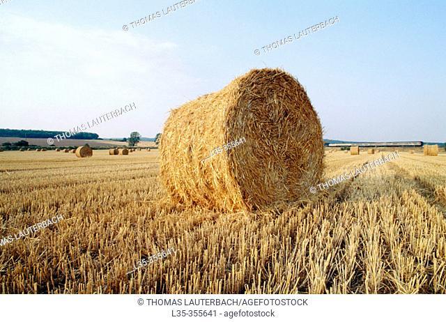 Wheat harvest. Goslar. Germany