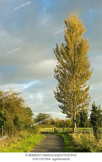 Oxfordshire lane in autumn, Binsey, Oxfordshire, England, UK