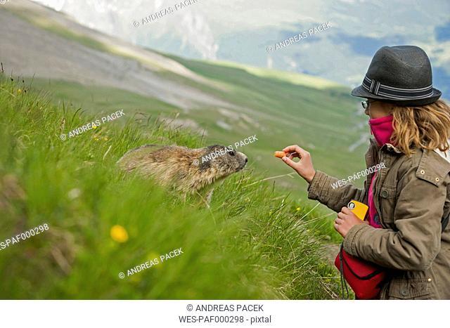 Austria, Carinthia, Kaiser-Franz-Josefs-Hoehe, girl feeding alpine marmot (marmota marmota)