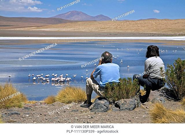 Tourists watching flamingos foraging in the Laguna Cañapa, Altiplano, Bolivia