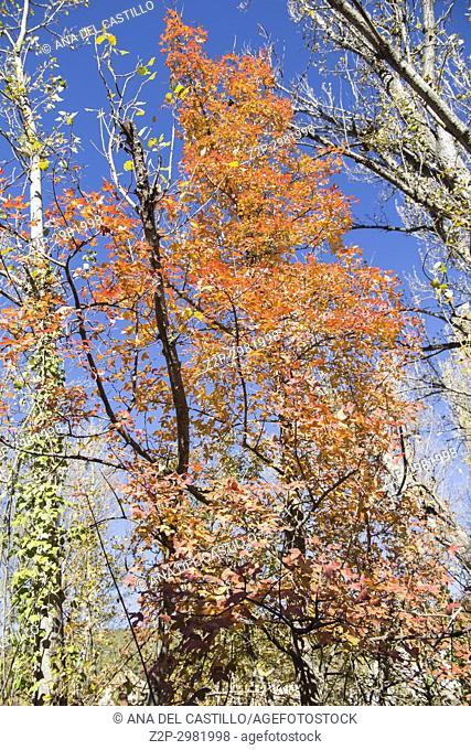 Autumn in Olba Gudar mountains. Teruel, Aragon, Spain