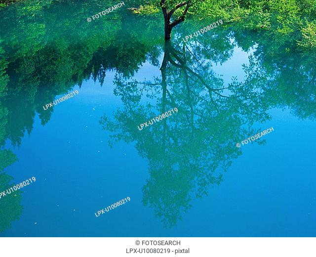 a Little Water, Reflecting a Single Tree That Stands In Front of it, High Angle View, Akita Prefecture, Japan