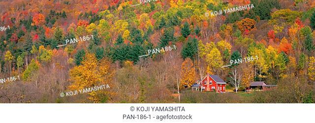 Autumn Scene near Woodstock, Vermont, USA, No Release